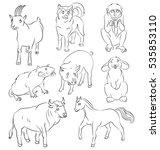 Image Of A Bull  Dog  Goat ...