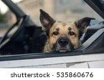 Sheep Dog In The Car