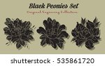 vector black peonies set... | Shutterstock .eps vector #535861720