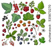 set of vector berries and... | Shutterstock .eps vector #535873270