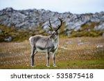 reindeer | Shutterstock . vector #535875418