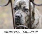 sad dog behind bars | Shutterstock . vector #536069629