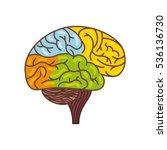 human brain creative hemisphere ... | Shutterstock .eps vector #536136730
