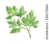watercolor vegetable parsley... | Shutterstock . vector #536172064