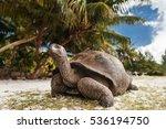 Stock photo seychelles giant tortoise on curieuse island 536194750