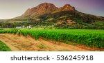 vineyards and helderberg... | Shutterstock . vector #536245918