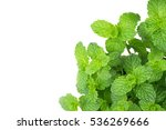 green peppermint leaves with... | Shutterstock . vector #536269666