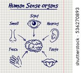 synopsis of human sense organs... | Shutterstock .eps vector #536270893