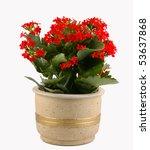 red flowering pot plant | Shutterstock . vector #53637868