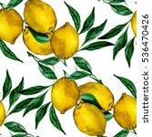 watercolor lemon branch...   Shutterstock . vector #536470426