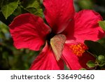 Butterfly On The Pink Hibiscus...
