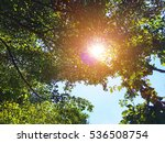 view under the trees to the sky   Shutterstock . vector #536508754