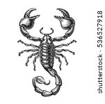 hand drawn sketch of scorpion.... | Shutterstock .eps vector #536527918