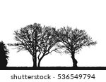 realistic trees  silhouette ...   Shutterstock .eps vector #536549794