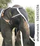 Asian Elephant Dress Up On...