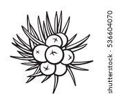 juniper berries  sketch style...   Shutterstock .eps vector #536604070