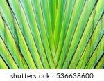 Ravenala  Nature Green Striped...