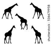 silhouette of giraffes. vector... | Shutterstock .eps vector #536679958