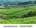 tea plantation landscape | Shutterstock . vector #536692684