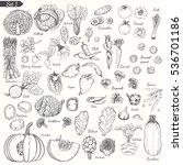 big set of vegetables in sketch ...   Shutterstock .eps vector #536701186