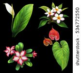 Exotic Plants And Flowers Set...