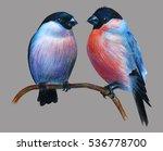Bullfinch Bird Couple Drawing...