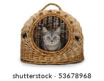 Stock photo cat in handbasket on white background 53678968
