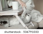 Stock photo lady playing with cat in bed wearing casual white attire 536791033