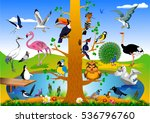 Collection Of Birds In The...