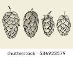 hand drawn engraving style hops ... | Shutterstock .eps vector #536923579