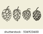 hand drawn engraving style hops ... | Shutterstock .eps vector #536923600