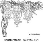 hand painted wisteria. wistaria ... | Shutterstock .eps vector #536953414