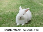 Stock photo new zealand white rabbit or cute bunny on green grass 537038443
