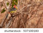 colorful bird on the tree  on... | Shutterstock . vector #537100183