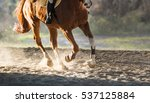 Stock photo a horse riding in the autumn 537125884