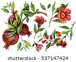 watercolor hand painted... | Shutterstock . vector #537147424