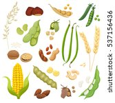 cute and tasty legumes  grains... | Shutterstock .eps vector #537156436