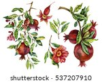 watercolor hand painted... | Shutterstock . vector #537207910