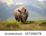 a white rhino   rhinoceros with ... | Shutterstock . vector #537208378