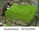 Green Moss On The Rock  Moss O...