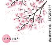 sakura japan cherry branch with ... | Shutterstock .eps vector #537250849