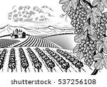 vineyard valley landscape black ... | Shutterstock .eps vector #537256108