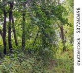 beautiful summer landscape with ...   Shutterstock . vector #537260698