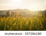 evening light flowers... | Shutterstock . vector #537286180