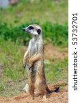 suricatta | Shutterstock . vector #53732701