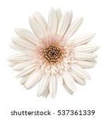 beautiful pink gerbera flower... | Shutterstock . vector #537361339