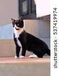 black and white cat in the yard | Shutterstock . vector #537419974