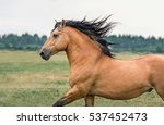 Stock photo portrait of a running horse 537452473