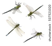Stock photo set of macro shots of dragonfly isolated on white background 537521020