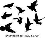 illustration with pigeon... | Shutterstock .eps vector #53753734